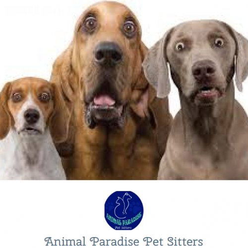 Ruan chats to Dennis Radue, owner of Animal Paradise Pet Sitters